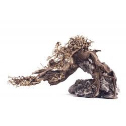 Korzeń bonsai, S 30CM