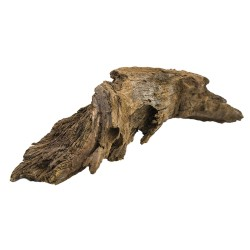 Korzeń Mangrowca ML 36-46 cm